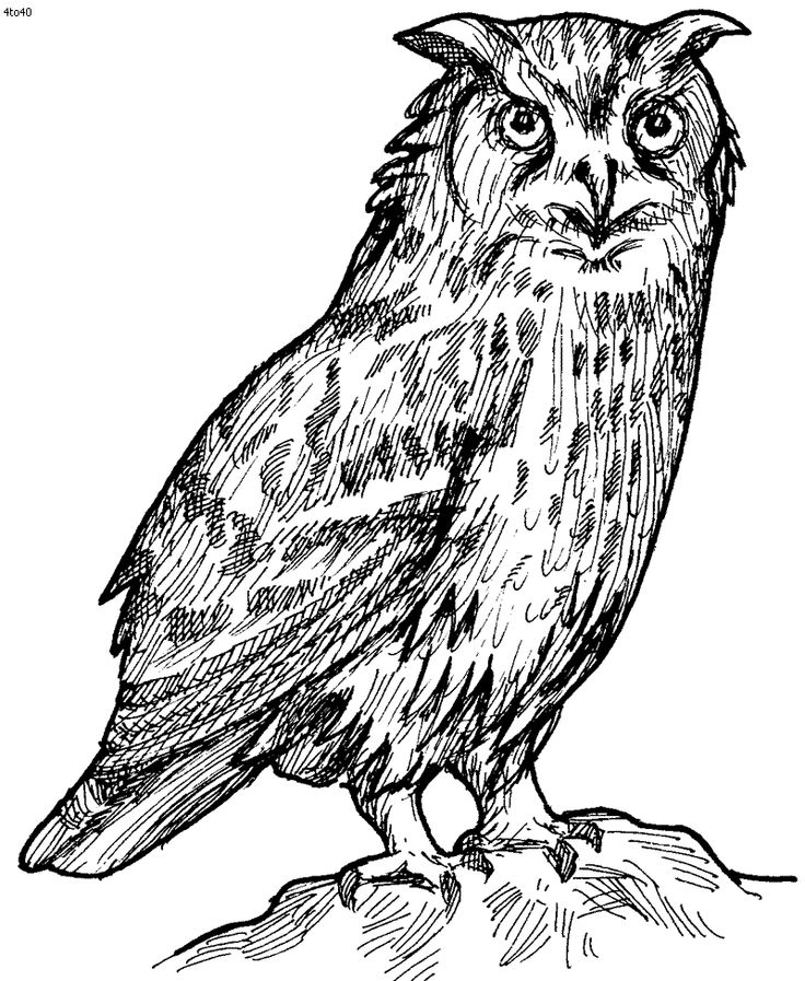 free owl printables owls to color on pinterest owl coloring pages owl and free printables owl
