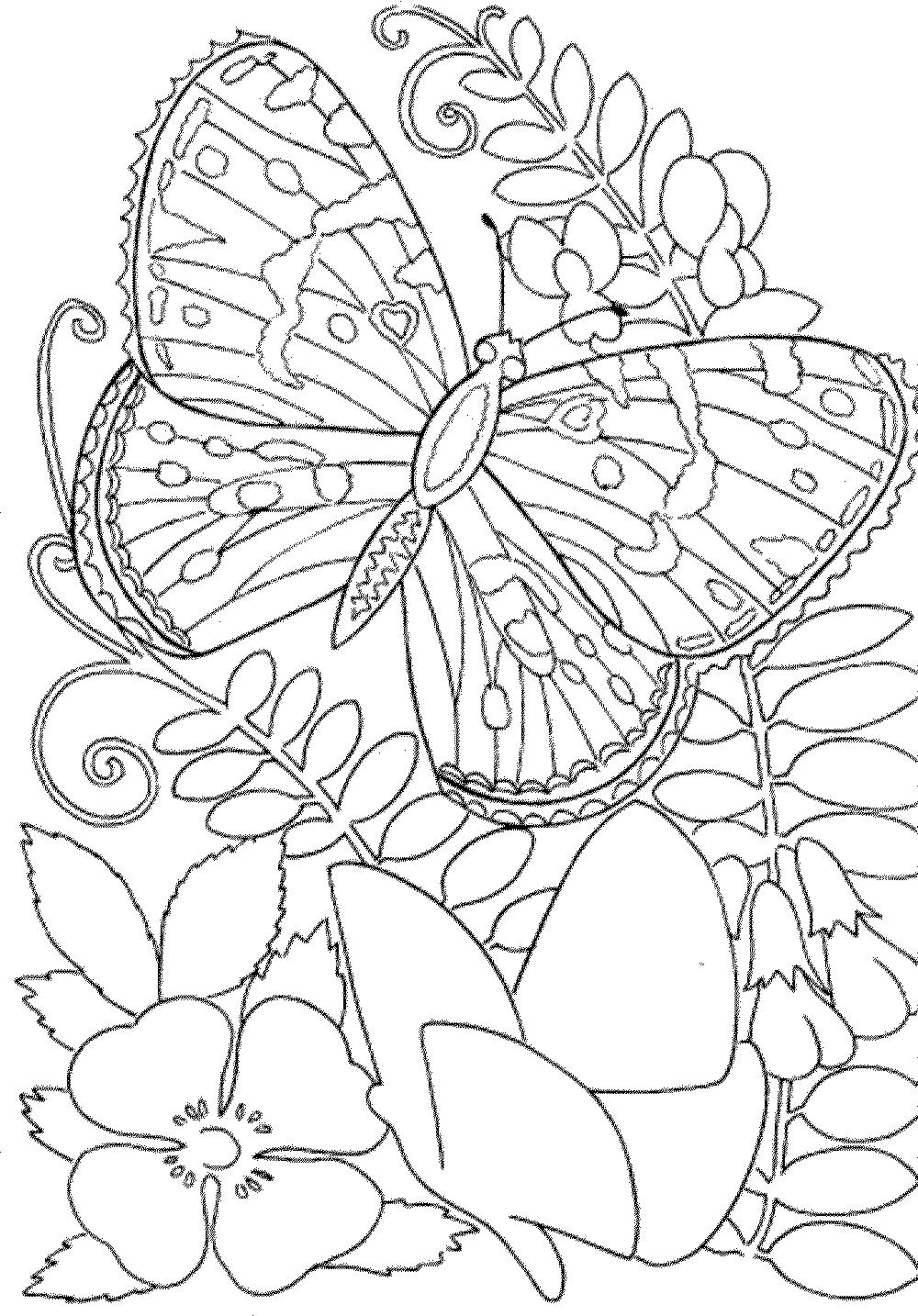 Free printable coloring pages for adults and kids
