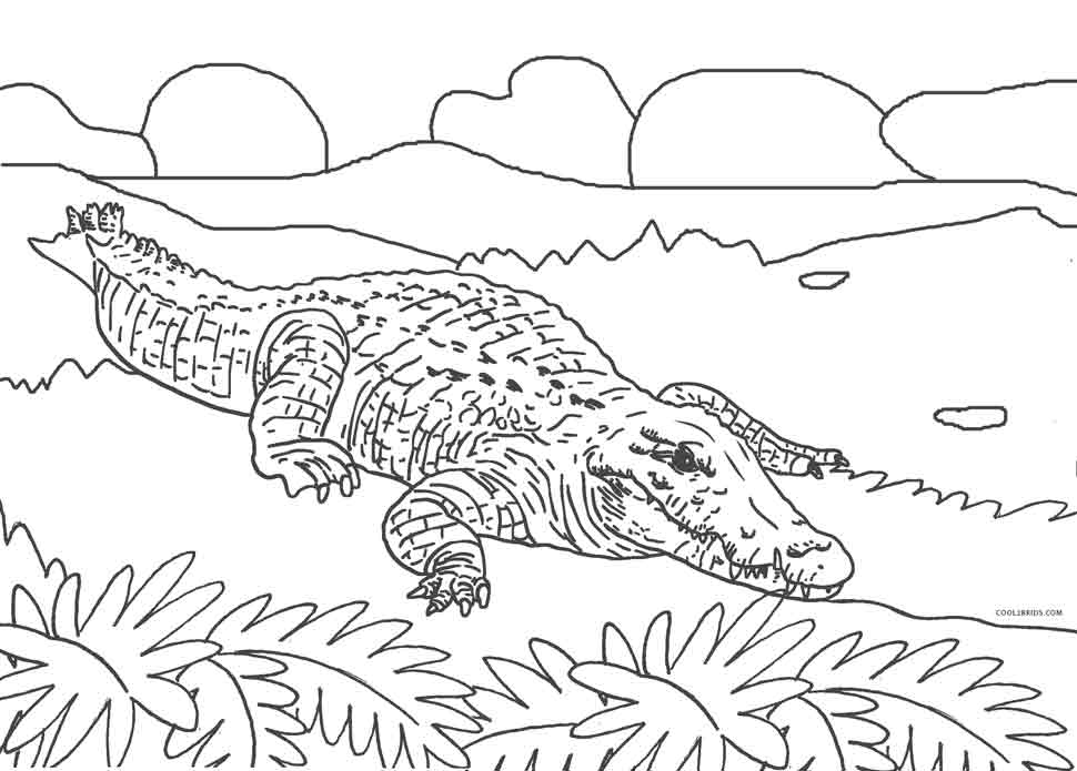 free printable pictures of alligators alligator coloring page art starts alligators of pictures printable free