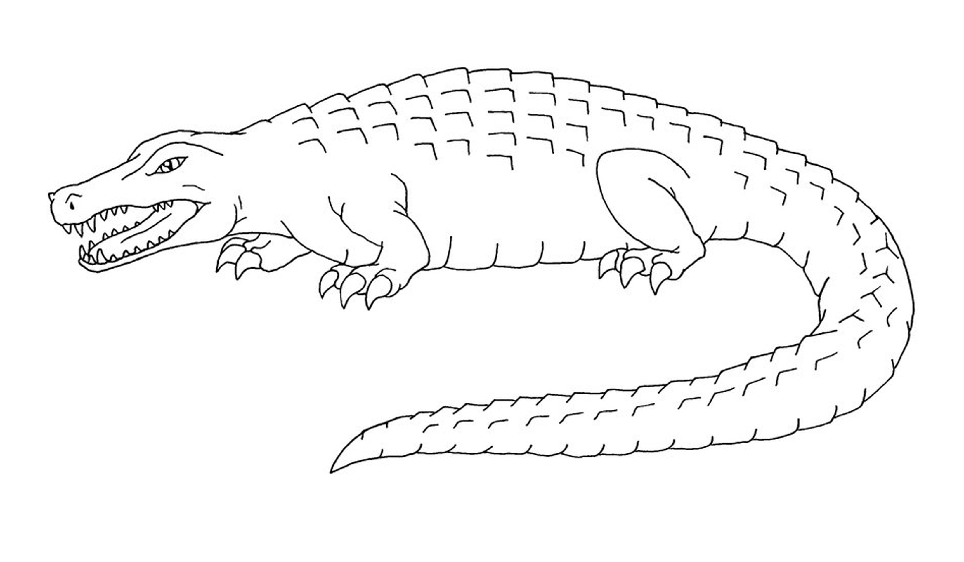 free printable pictures of alligators alligator coloring pages cool2bkids alligators printable of free pictures