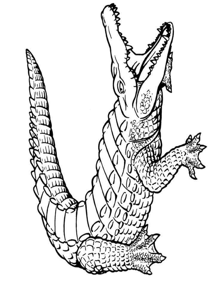 free printable pictures of alligators alligator coloring pages cool2bkids free of printable pictures alligators