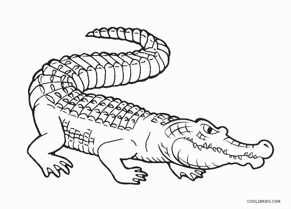 free printable pictures of alligators alligator coloring pages cool2bkids pictures free alligators printable of