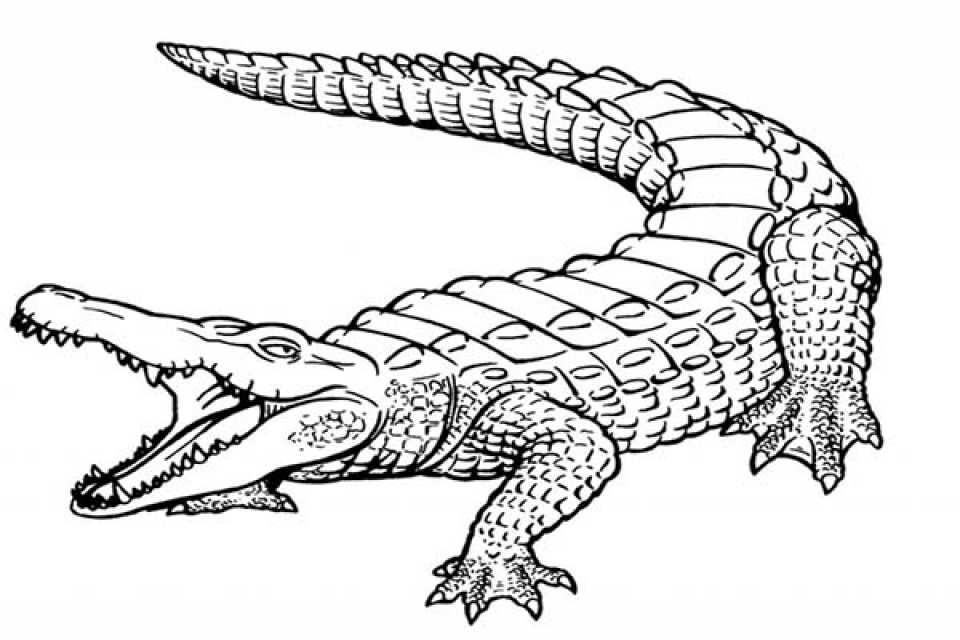 free printable pictures of alligators alligator coloring pages free printable enjoy coloring alligators printable free pictures of