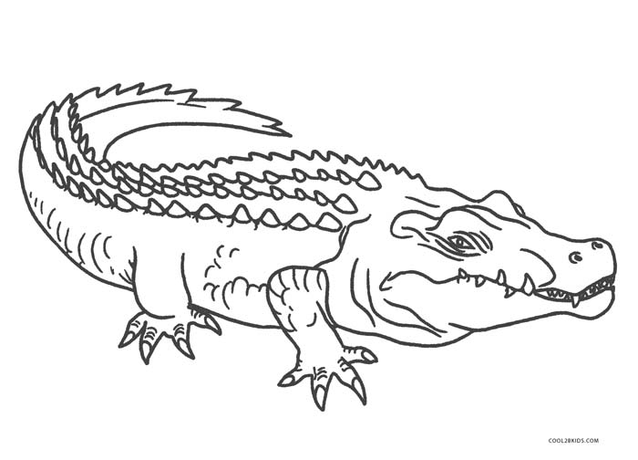 free printable pictures of alligators american alligator coloring page at getcoloringscom alligators printable of pictures free