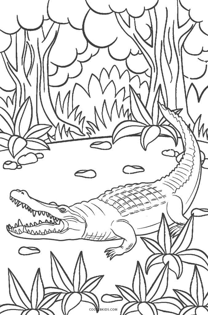 free printable pictures of alligators american alligator coloring page at getcoloringscom free pictures of printable alligators