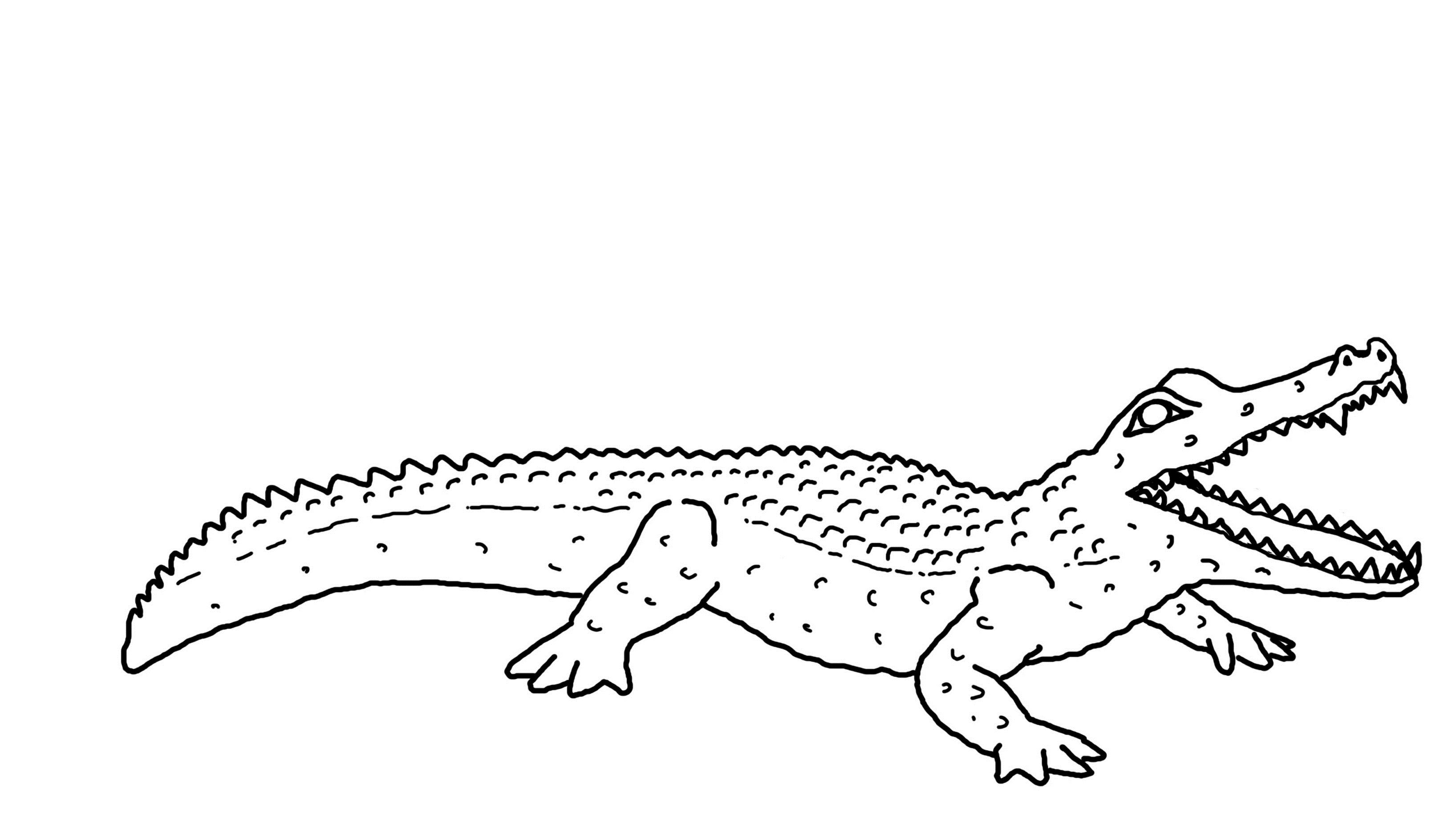 free printable pictures of alligators baby crocodile drawing at getdrawings free download printable free pictures of alligators
