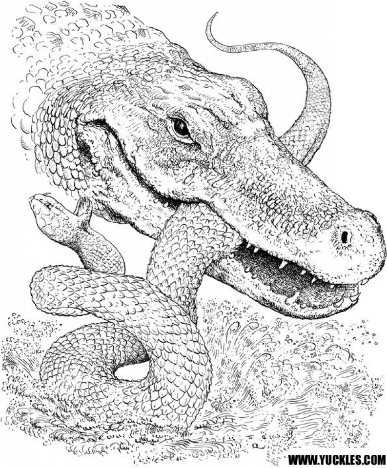 free printable pictures of alligators free alligator coloring pages download and print deer of alligators free pictures printable