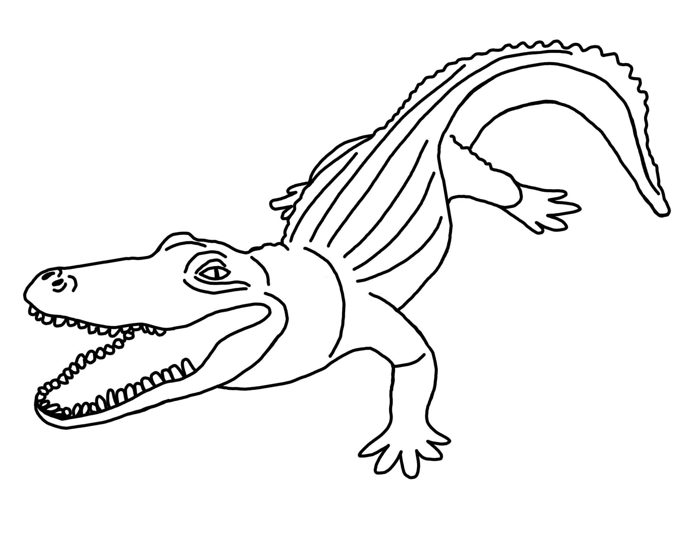 free printable pictures of alligators free printable alligator coloring pages for kids animal of pictures free printable alligators