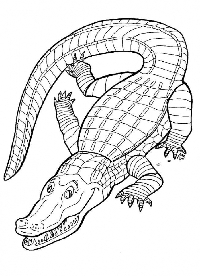 free printable pictures of alligators free printable alligator coloring pages for kids cool2bkids alligators of free pictures printable