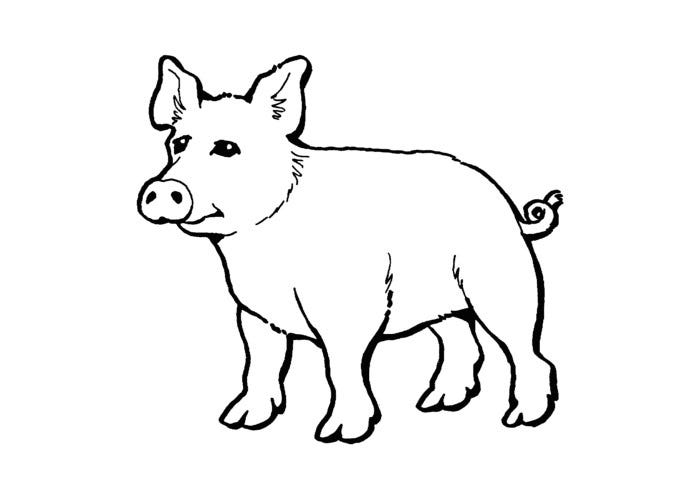 free printable pig template pig template animal templates free premium templates free printable template pig