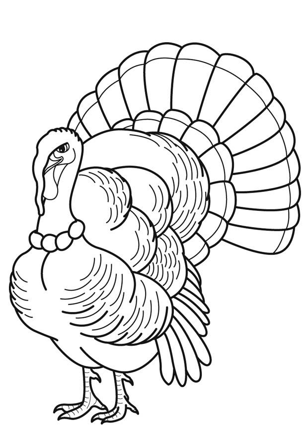 free turkey coloring pages free printable turkey coloring pages for kids pages free coloring turkey