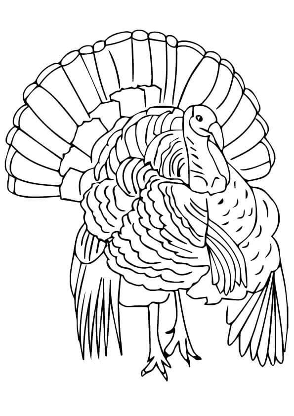 free turkey coloring pages hand turkey coloring pages at getcoloringscom free turkey pages coloring free