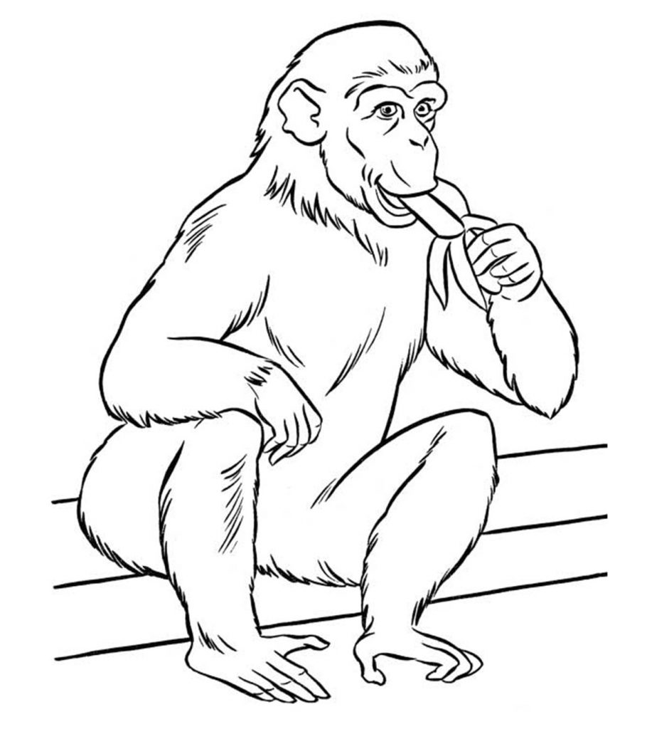 free zoo coloring pages free printable jungle animal coloring pages zoo coloring coloring pages zoo free