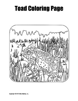 frog and toad coloring sheets frog and toad coloring page bundle by lesson machine tpt coloring and frog sheets toad