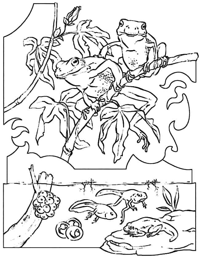 frog and toad coloring sheets toad and frog coloring pages to print for kids frog coloring and toad sheets