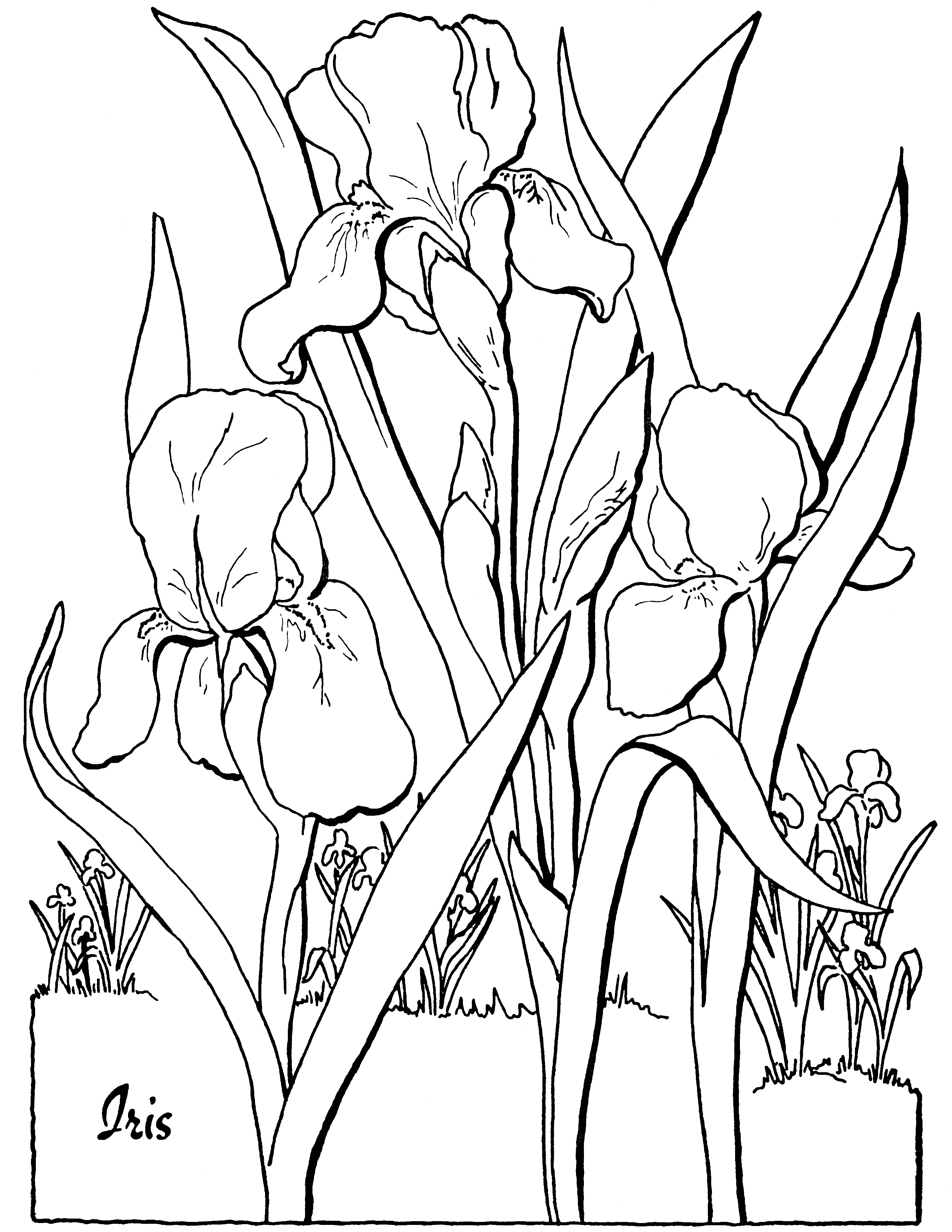 full size coloring pages free adult floral coloring page the graphics fairy pages coloring size full