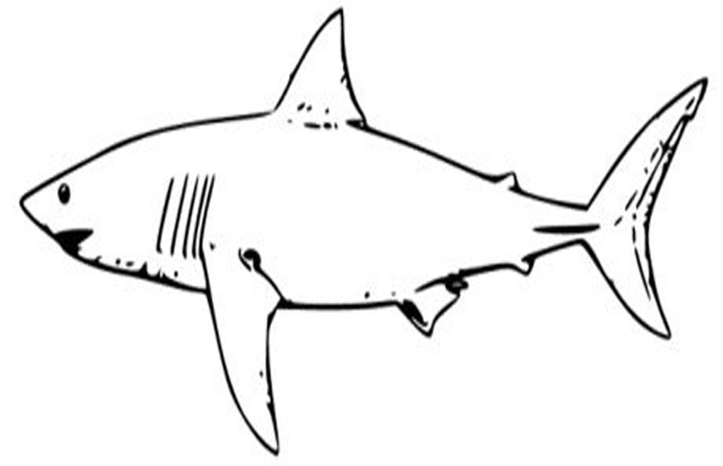 funny shark coloring pages black and white shark pictures clipartsco coloring pages funny shark