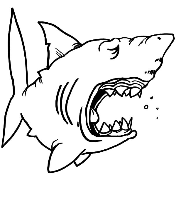 funny shark coloring pages shark drawing template at getdrawings free download shark pages coloring funny