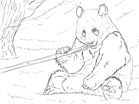 giant panda coloring pages printable free panda bear coloring pages printable giant coloring pages panda