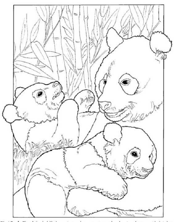 giant panda coloring pages printable giant panda coloring page educationcom pages panda printable coloring giant