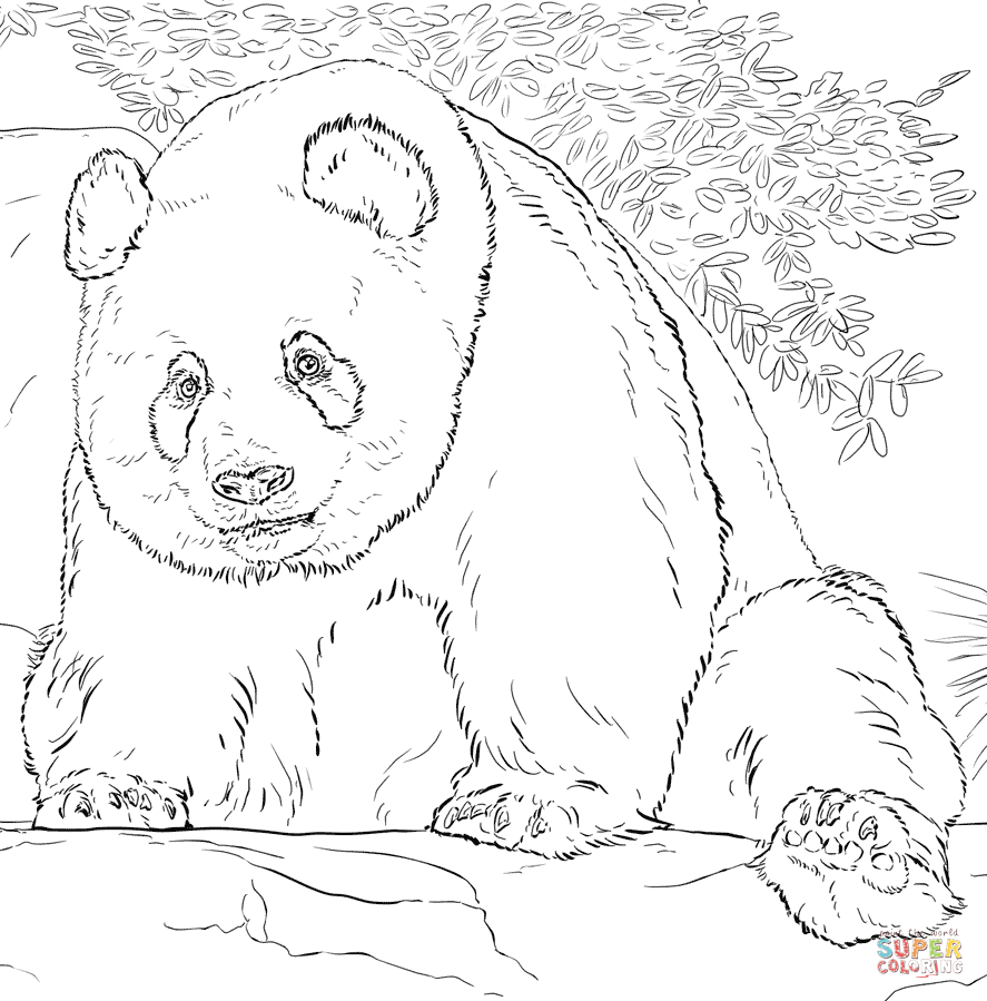 giant panda coloring pages printable giant panda coloring pages free baby pandas coloring pages panda printable giant coloring pages