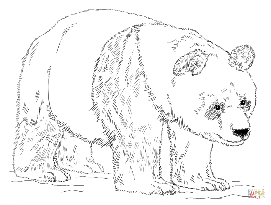 Giant panda coloring pages printable