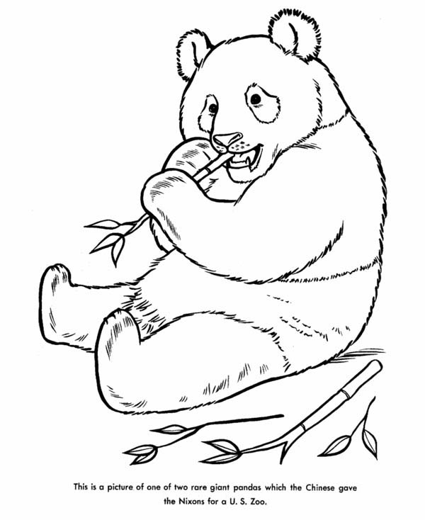 giant panda coloring pages printable giant pandas life cycles and coloring pages on pinterest pages coloring giant panda printable