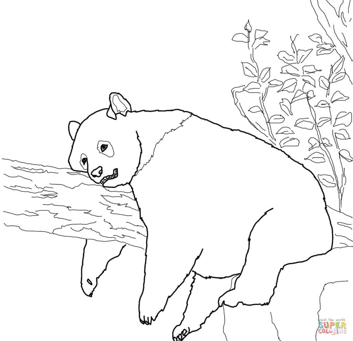giant panda coloring pages printable panda coloring page free printable coloring pages giant printable panda pages coloring