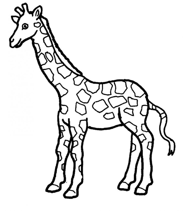 giraffe face coloring pages free giraffe coloring pages giraffe coloring pages face
