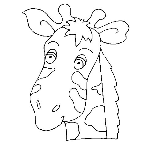 giraffe face coloring pages giraffe clipart coloring giraffe coloring transparent face giraffe coloring pages