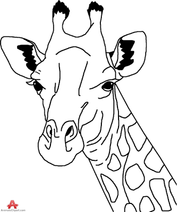 giraffe face coloring pages giraffe coloring pages free download on clipartmag pages coloring giraffe face