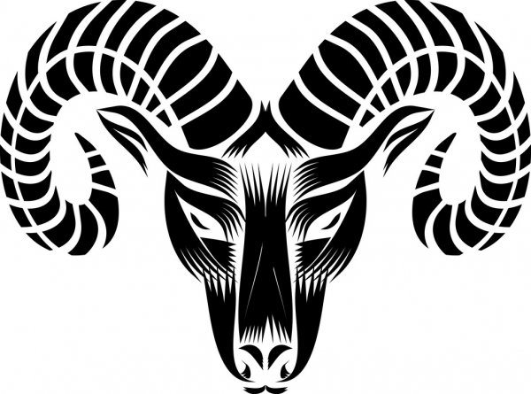 goat head drawing goat head stock vector illustration of sign year design head goat drawing