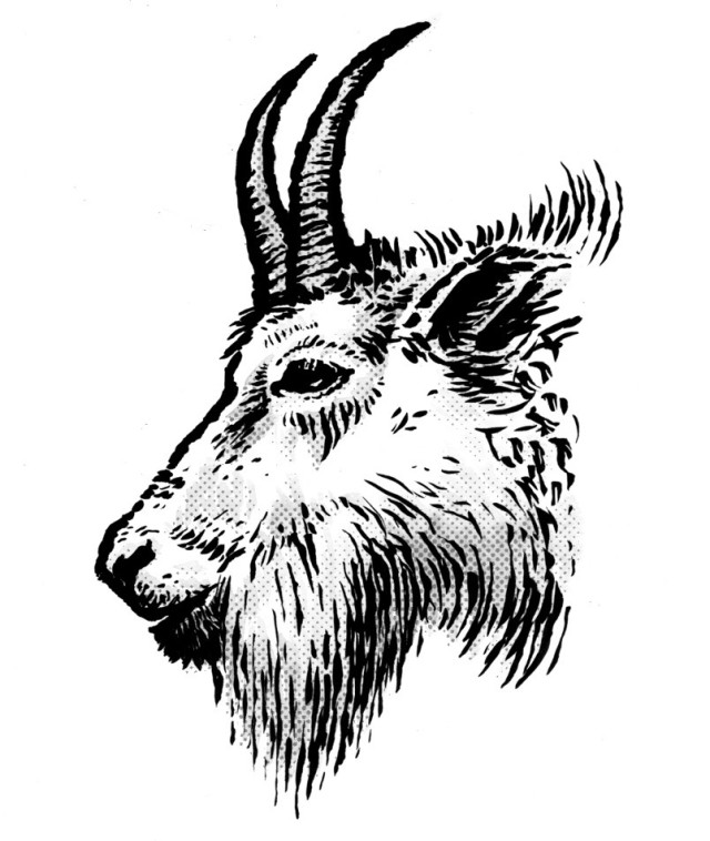 goat head drawing linear stylized drawing goat39s head stock vector head drawing goat