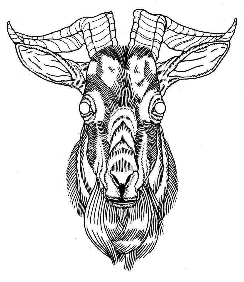goat head drawing royalty free goat side clip art vector images goat head drawing