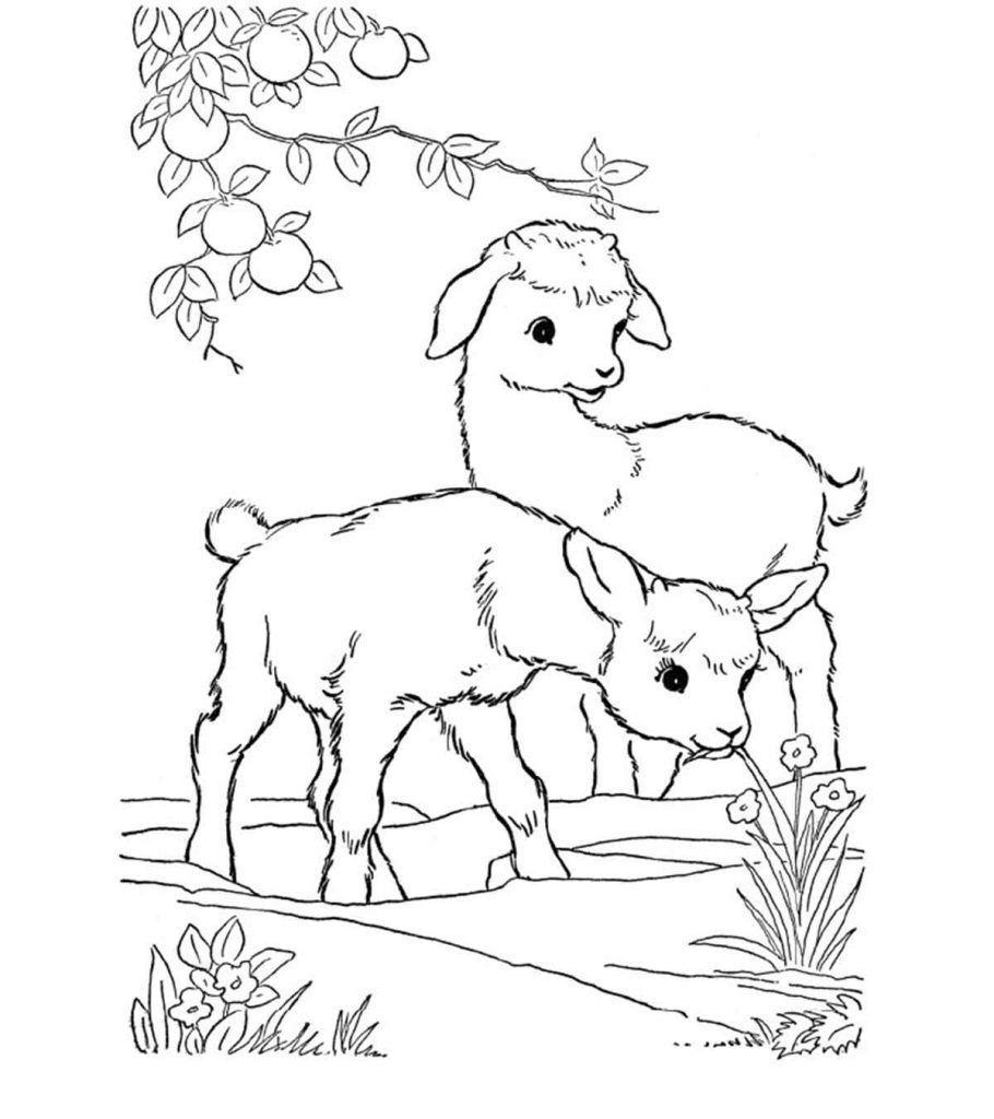 goat to color coloring pages goat animals gt goat free printable to color goat