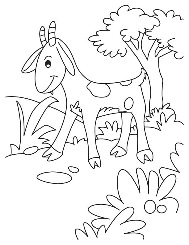 goat to color cute big eyed goat coloring pages color luna to color goat