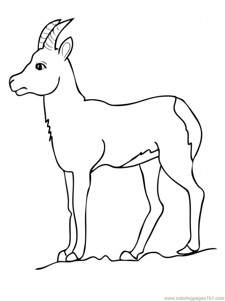 goat to color drawing goat coloring pages color luna goat color to