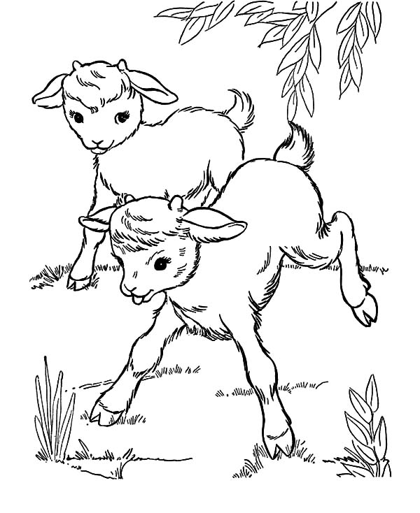 goat to color goat coloring pages ideas whitesbelfast color to goat