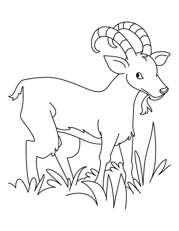 goat to color printable animals coloring pages sheets coloring pages color goat to