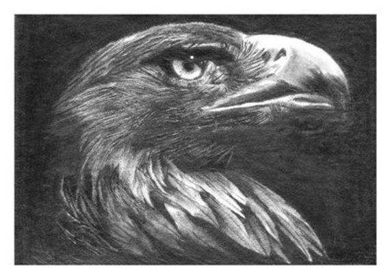 golden eagle drawing aceo golden eagle bird pencil drawing signed print by lisandro eagle drawing golden