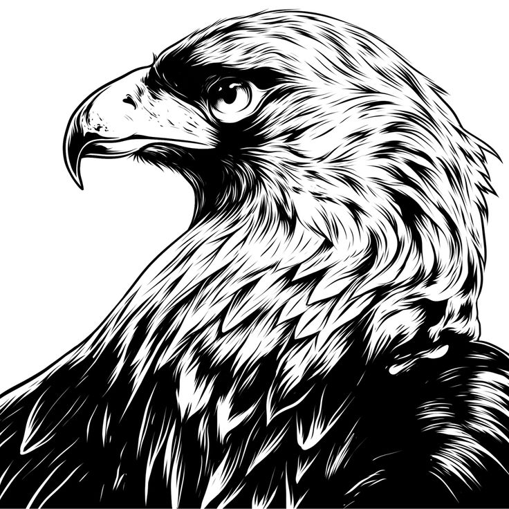 golden eagle drawing eagle eye in the big smoke on behance in 2019 eagle eagle golden drawing