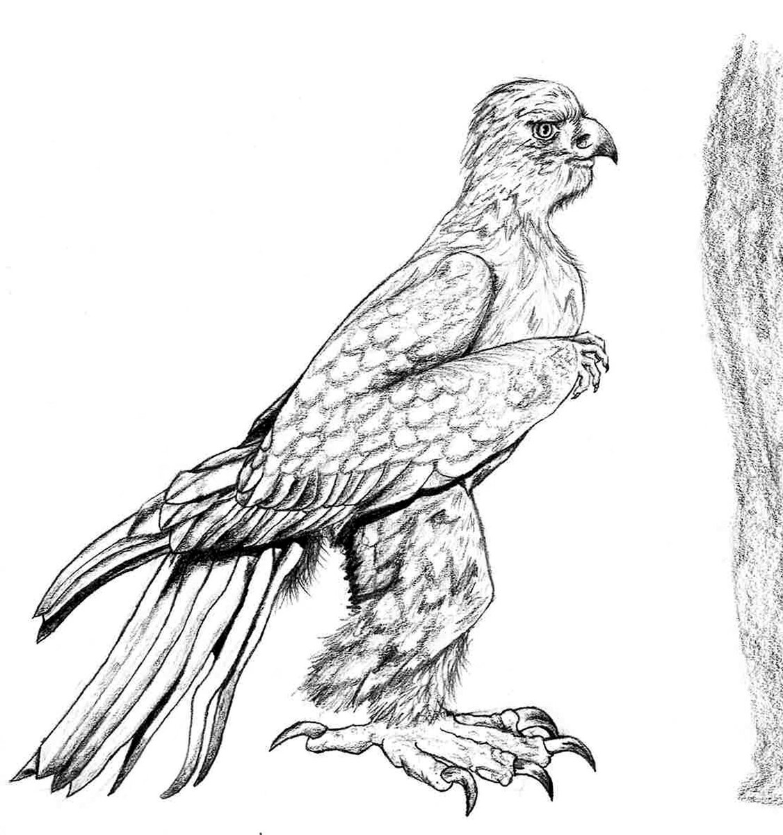 golden eagle drawing golden eagle drawing free download on clipartmag eagle drawing golden