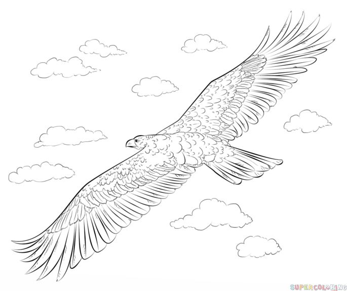 golden eagle drawing how to draw a golden eagle step by step drawing tutorials golden eagle drawing