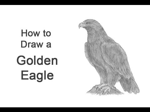 golden eagle drawing how to draw a golden eagle youtube eagle drawing golden