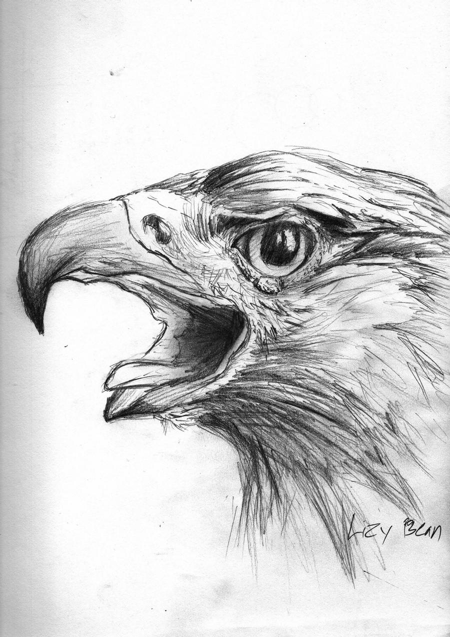 golden eagle drawing mexican golden eagle by lupus lily on deviantart eagle drawing golden
