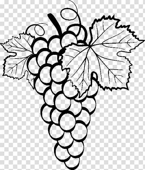 grapes drawing 1000 images about grape vine art on pinterest grape drawing grapes