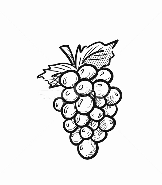 grapes drawing line art of a bunch of grapes fruit coloring pages drawing grapes