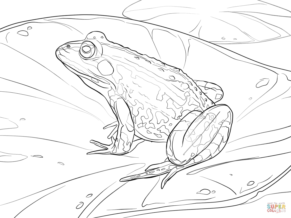 green tree frog coloring page free frog coloring pages frog green tree page coloring