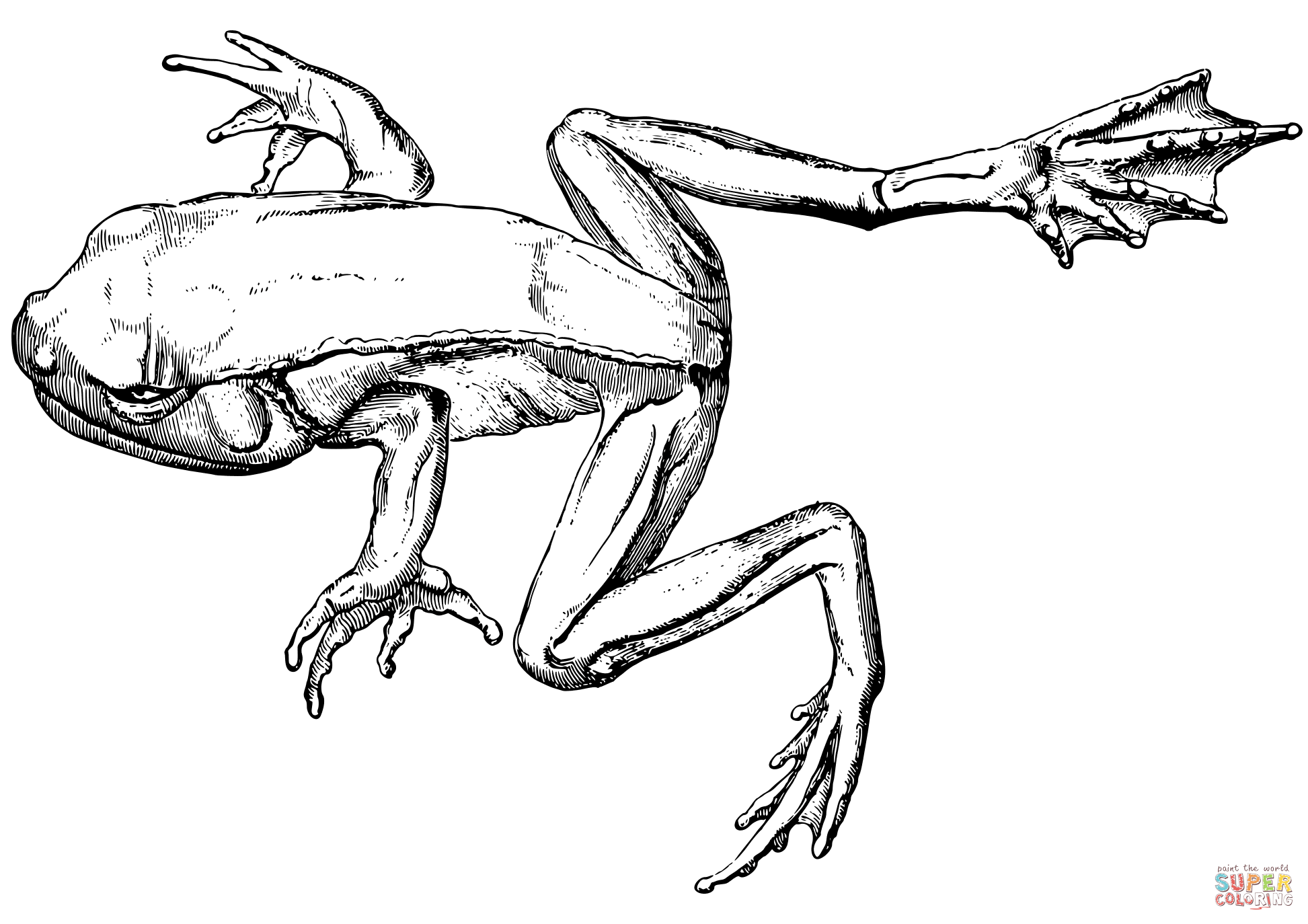 green tree frog coloring page frog outlines free download on clipartmag green frog page tree coloring