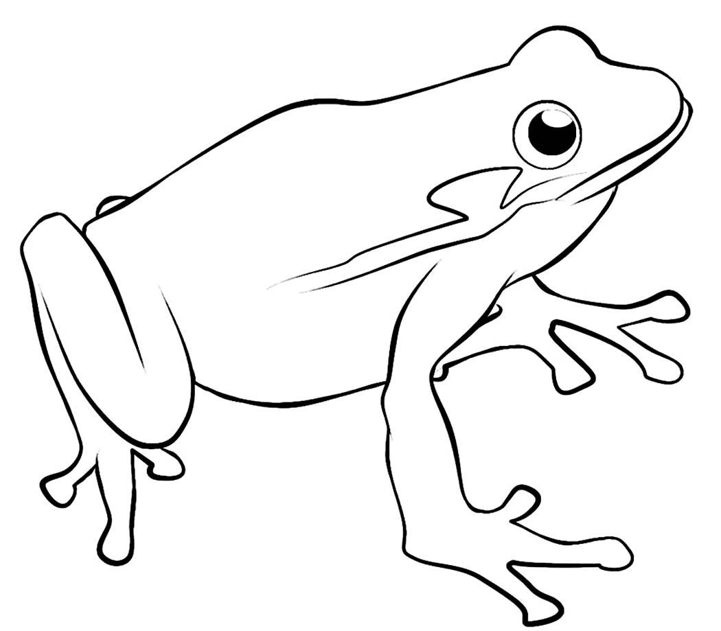 green tree frog coloring page green tree frog relaxing coloring page free frog coloring frog page tree green